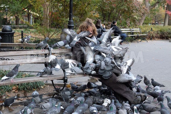 1384228785-larry-the-pigeon-man-of-washi