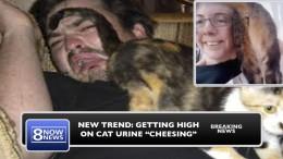 Cheesing Getting High On Cat Urine
